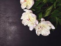 3 белых цветя пиона Стоковая Фотография RF