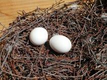 2 белых яичка в гнезде Стоковое Изображение RF