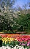 Бельгия зацветает весна Стоковое Изображение
