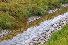 берега зеленого цвета Стоковые Изображения