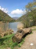 Берега озера с стволом дерева Стоковые Изображения