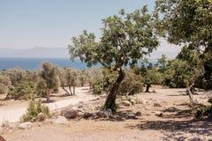 Береговая линия и деревья Кипр Стоковое Фото
