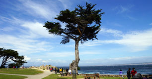 Береговая линия Калифорнии Стоковая Фотография