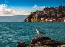 Береговая линия Ohrid, македонии Стоковая Фотография RF