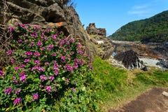 береговая линия цветет пинк Стоковая Фотография RF