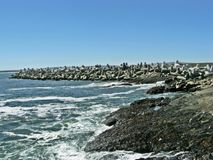 Береговая линия Yzerfontein стоковая фотография