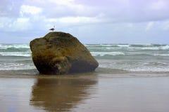 Береговая порода и чайка Стоковая Фотография RF