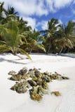береговая порода Стоковая Фотография