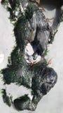 Береговая порода Стоковые Фотографии RF