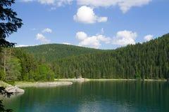 берег листьев озера цветков абстракции Стоковая Фотография RF