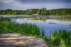 берег листьев озера цветков абстракции Стоковые Изображения RF