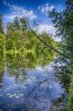 берег листьев озера цветков абстракции Стоковые Фото