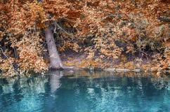 берег листьев озера цветков абстракции Стоковые Изображения
