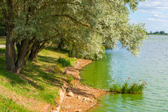 берег листьев озера цветков абстракции Стоковое Фото