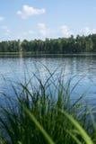 берег листьев озера цветков абстракции Стоковая Фотография