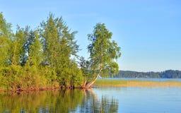берег листьев озера цветков абстракции Стоковое Изображение RF