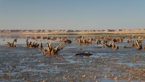 Берег моря или озера Эн-Наджафа, конец-вверх, Ирак стоковое изображение rf