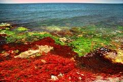 берег моря 6 черный цветов Стоковое фото RF