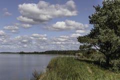 Берег озера в лете Стоковая Фотография RF