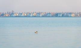 Берег озера в солнечном свете Стоковые Изображения