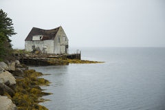 Берег озера глуши Стоковые Фото
