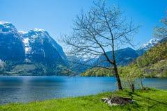 Берег озера, дерево на дерновине Стоковое Фото