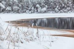 Берег озера зим с раскрытой водой в льде Стоковые Фотографии RF
