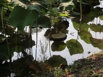 Берег озера крыс сток-видео
