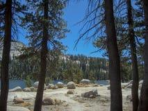 Берег озера от рощи сосен Стоковое Изображение