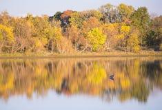 Берег озера падать Стоковые Изображения RF