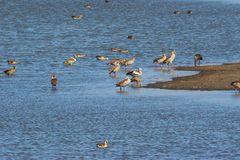 берег озера птиц Стоковые Фото