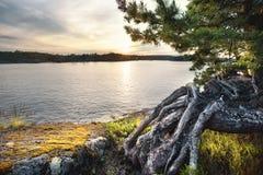 Берег озера с корнями дерева Стоковая Фотография