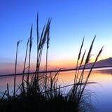 Берег озера стоковые фотографии rf