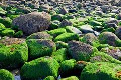 берег океана утесистый Стоковые Фотографии RF