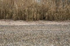 Берег Рейна стоковые изображения