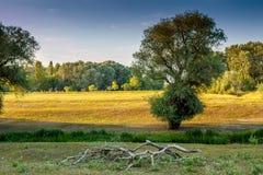 Берег реки в Венгрии Стоковое Изображение RF