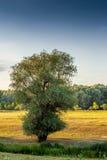 Берег реки в Венгрии стоковые фото