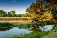 Берег реки в Венгрии Стоковые Фотографии RF