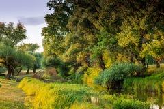 Берег реки в Венгрии стоковые изображения
