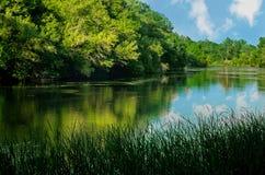 Берег реки в меловом ресервировании флоры Стоковые Изображения