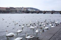 Берег реки в Праге. Стоковые Изображения