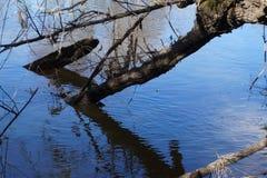 Берег реки зимы Стоковое Изображение