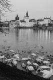 Берег реки 1 Праги, чехия Стоковые Фотографии RF