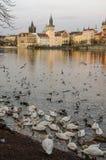 Берег реки 2 Праги, чехия Стоковые Изображения RF