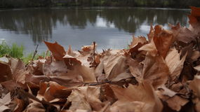 Берег реки сора листьев дуба в Новой Зеландии Стоковая Фотография