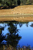 берег реки стаи Стоковое фото RF