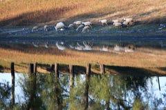 берег реки стаи Стоковое Изображение RF