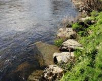 Берег реки берег реки, sunlit, утесы, засорители, тростники стоковое фото