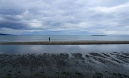 Берег северного залива в лете стоковое фото