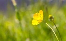 Берег травы прерии - селективный фокус на желтом цветке Стоковые Фотографии RF